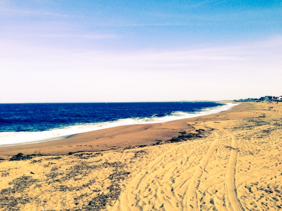 plum island - low res (108 of 17)
